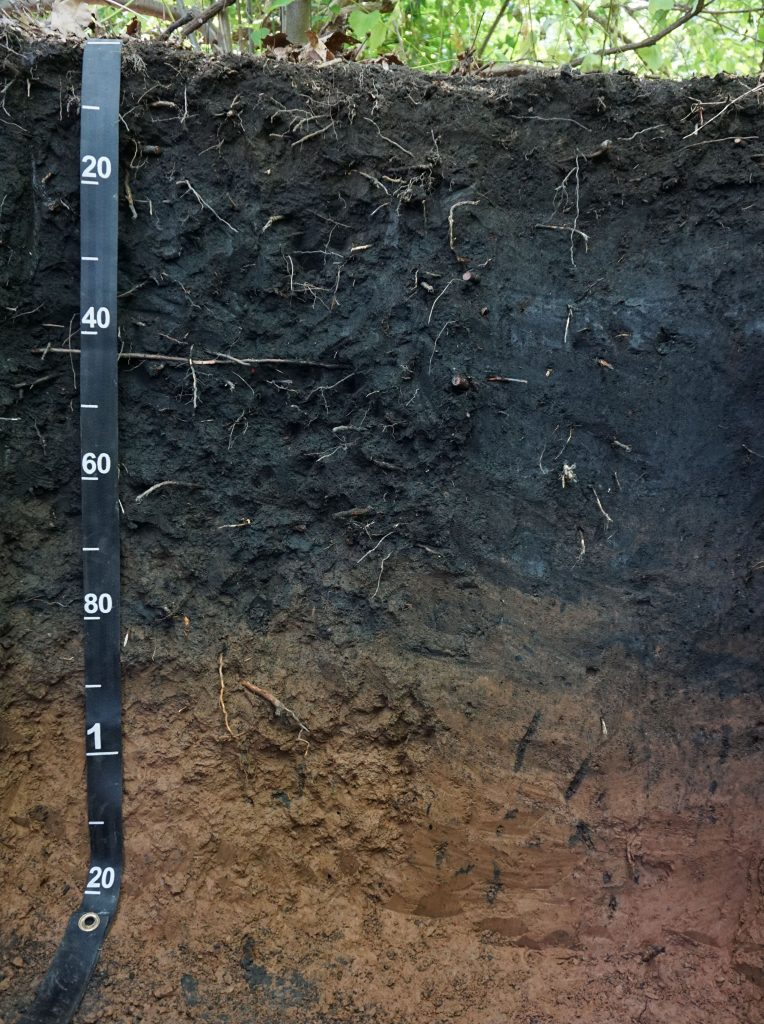 Carbon-rich soil, in eastern Pennsylvania, from Flickr user soilscience